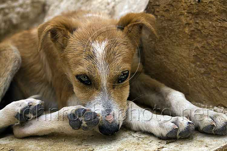a travel photograph of a dog resting at Luxor