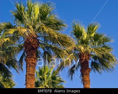 Palm trees in Egypt royalty free stock photo by John Rocha