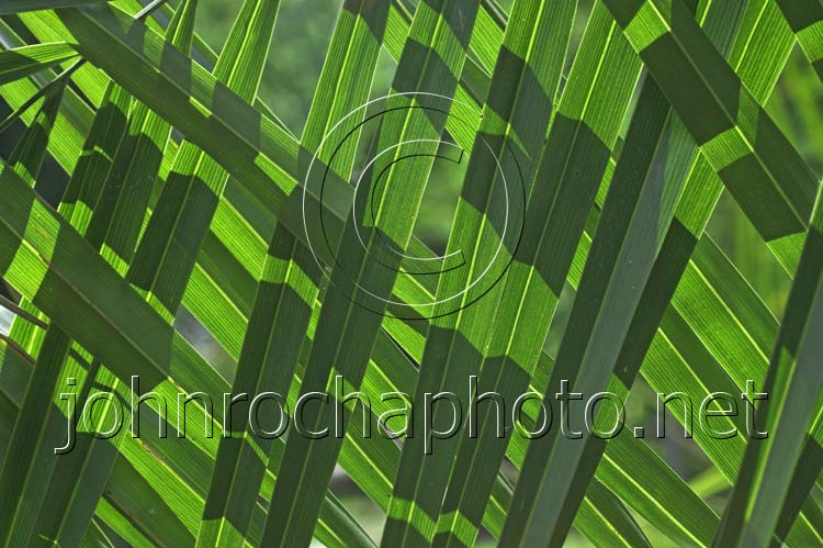 Pattern of Backlit Green Leaves