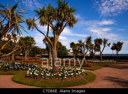 Palm trees in the beautiful gardens on the seafront on Torquay, Devon in England stockphoto by john rocha at johnrochaphoto.net