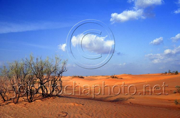 Wahabi Sands Desert Trees Photo by John Rocha at johnrochaphoto.net