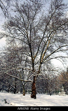 Snow Covered Trees In Sofia The Capital Of Bulgaria