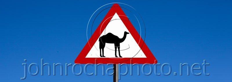 Camel Sign Warning Motorists Near Ibra in Oman