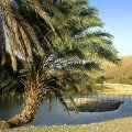 Rock Pool with Palm in Sharqiya Oman