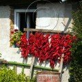 Cottage with Drying Peppers Bulgarian buildings